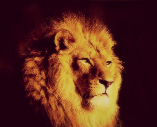 lion 72283